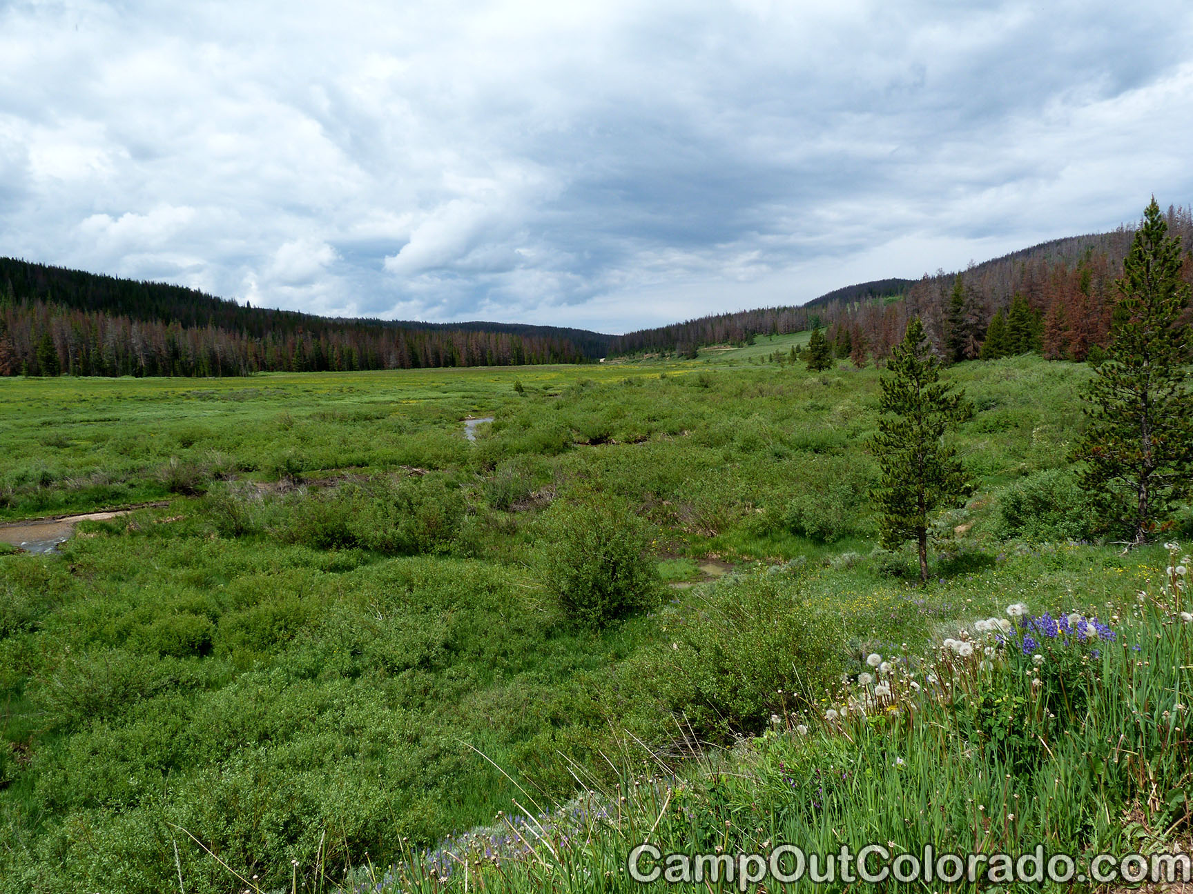Camp-out-colorado-bockman-campground-west-meadow