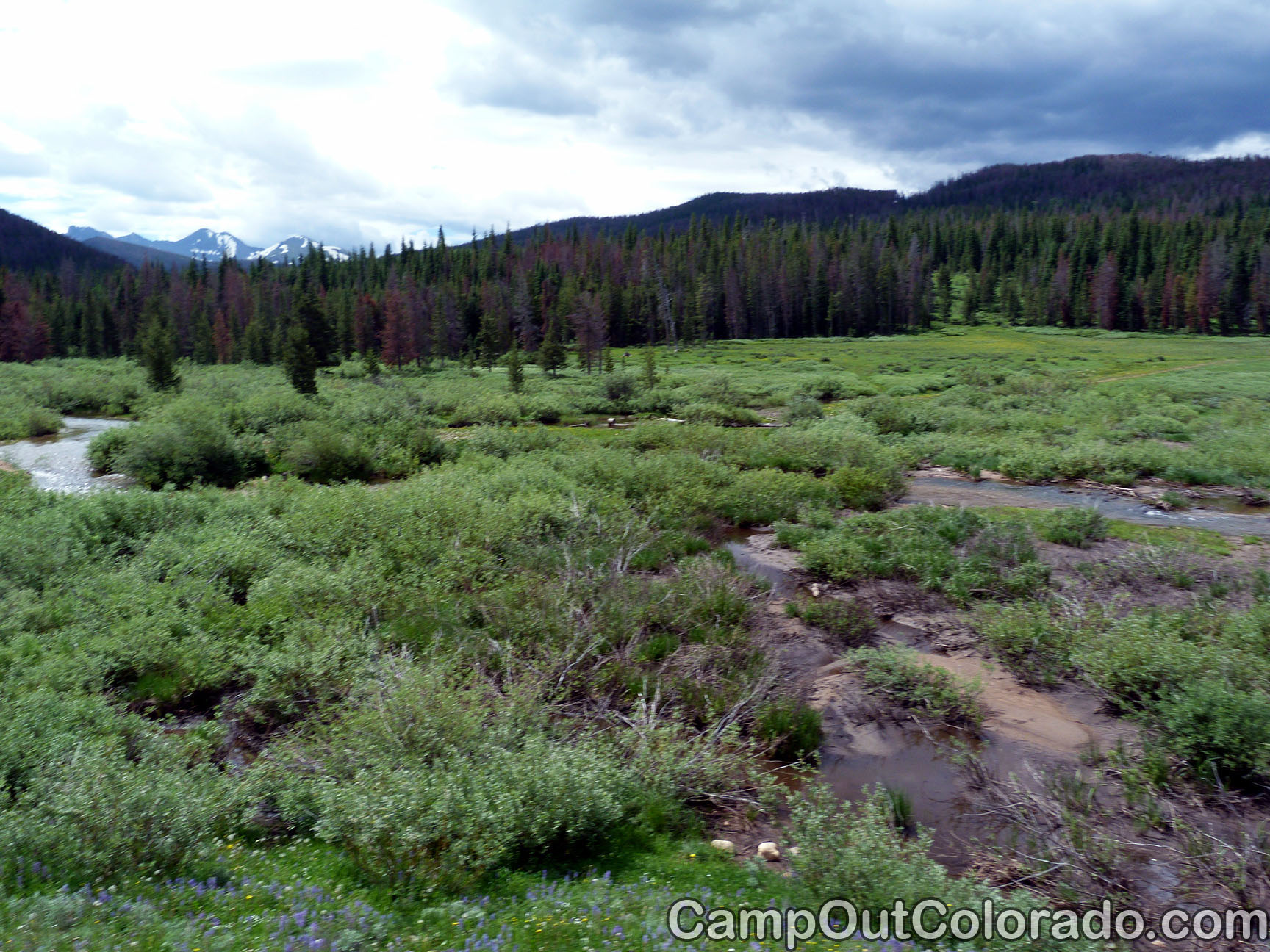 Camp-out-colorado-bockman-campground-willows-on-river