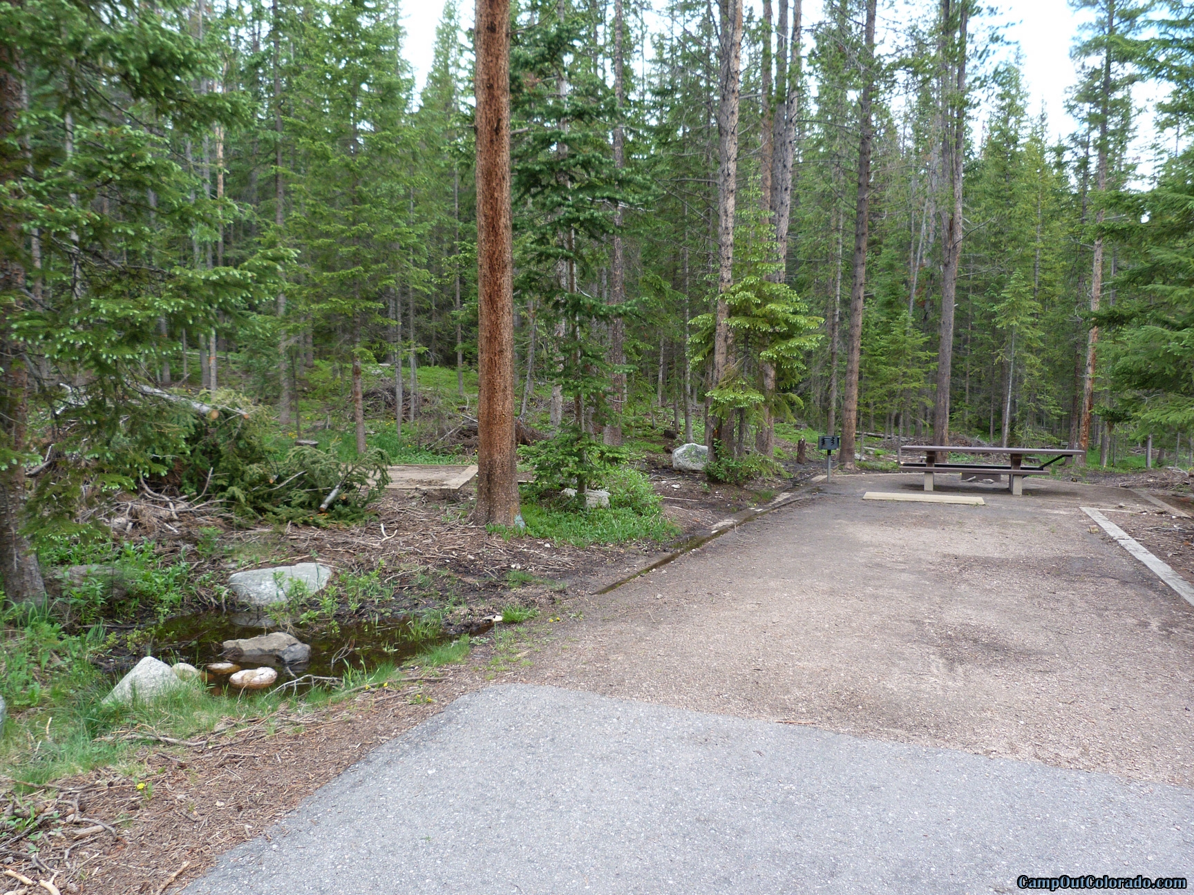 camp-out-colorado-chambers-lake-campground-dense-trees