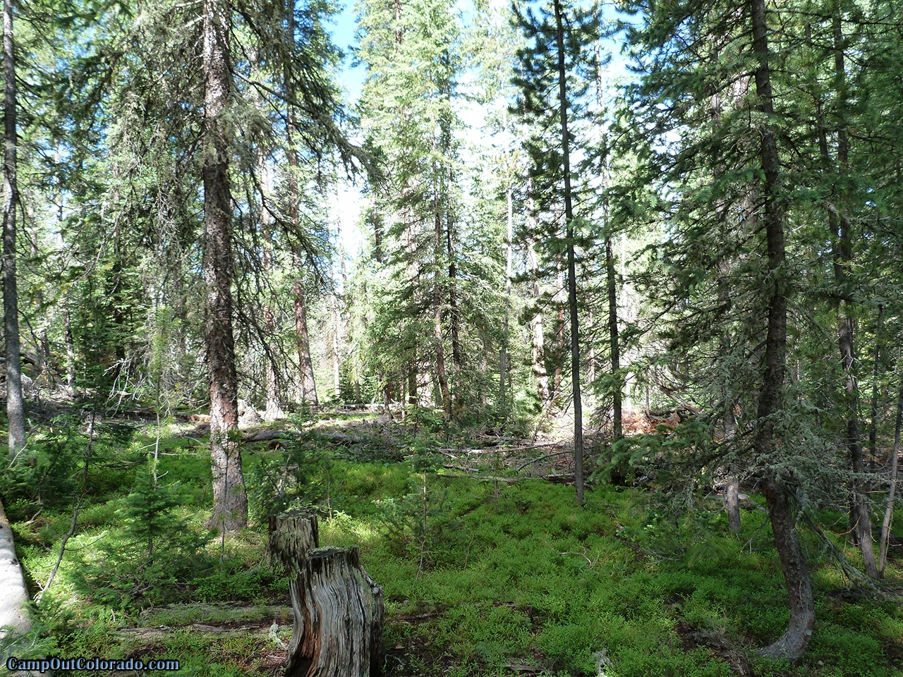 camp-out-colorado-ranger-lakes-campground-lush-forest.jpg