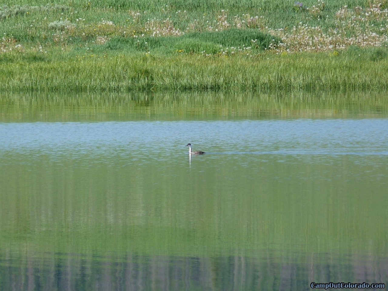 camp-out-colorado-steamboat-lake-bird