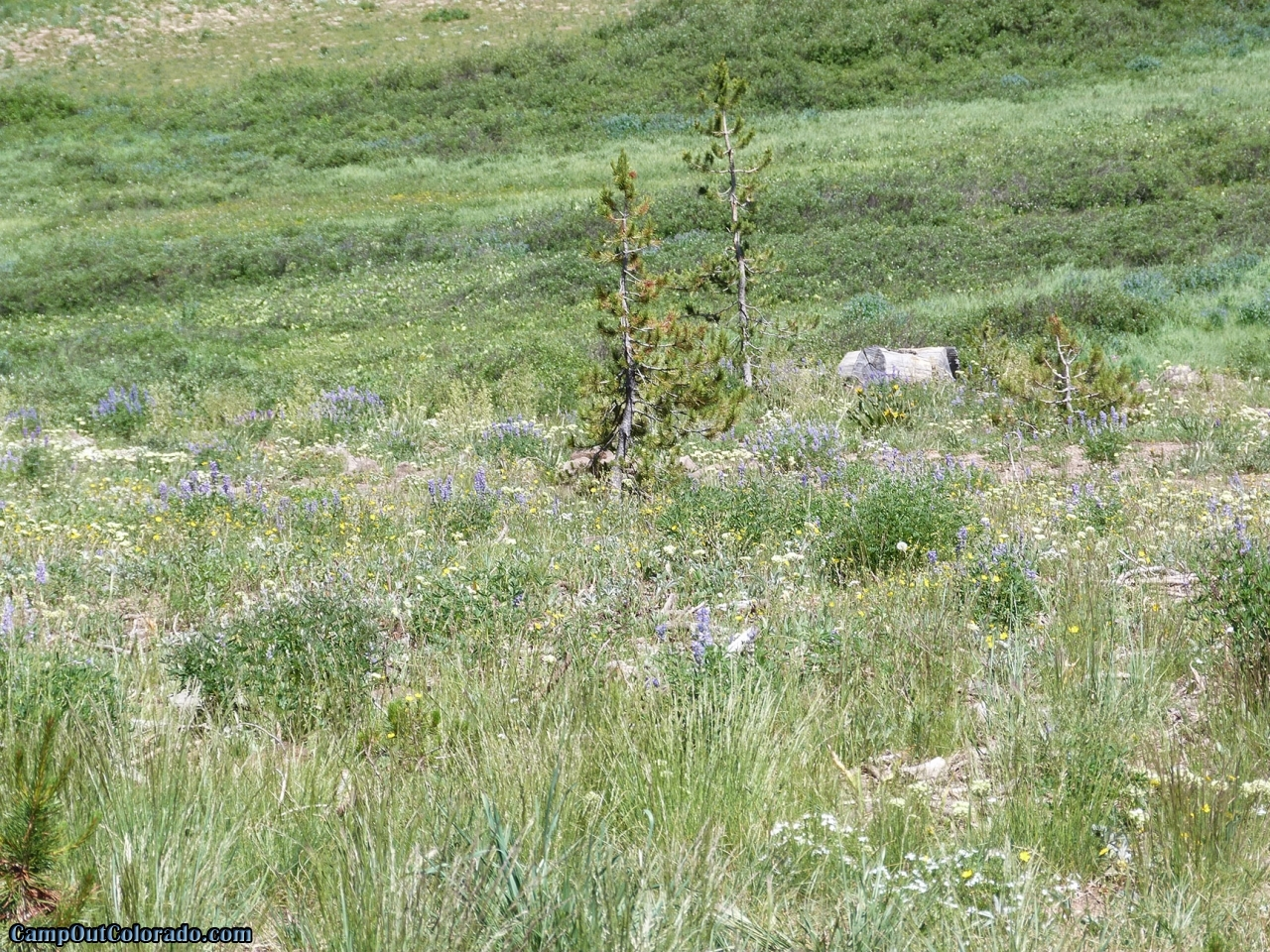 campoutcolorado-meadows-campground-rabbit-ears-meadow