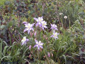 camp-out-colorado-aspen-campground-columbine-bunch