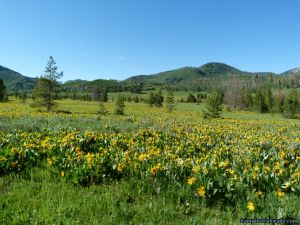 camp-out-colorado-steamboat-lake-flowering-meadow