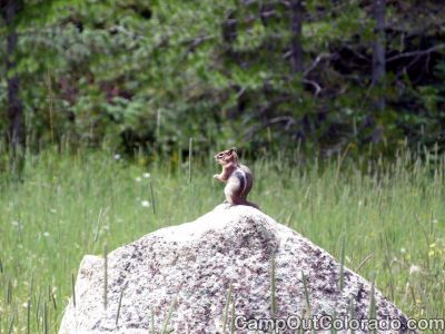 Campground-chipmunk 1