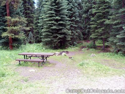 Campground-pine-trees 1