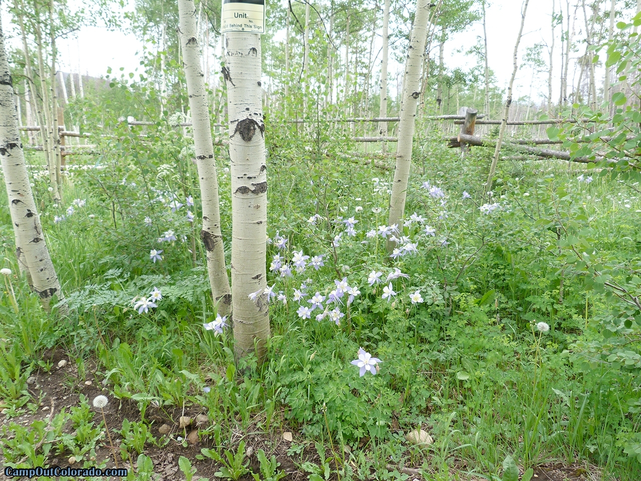camp-out-colorado-aspen-campground-columbine-protected
