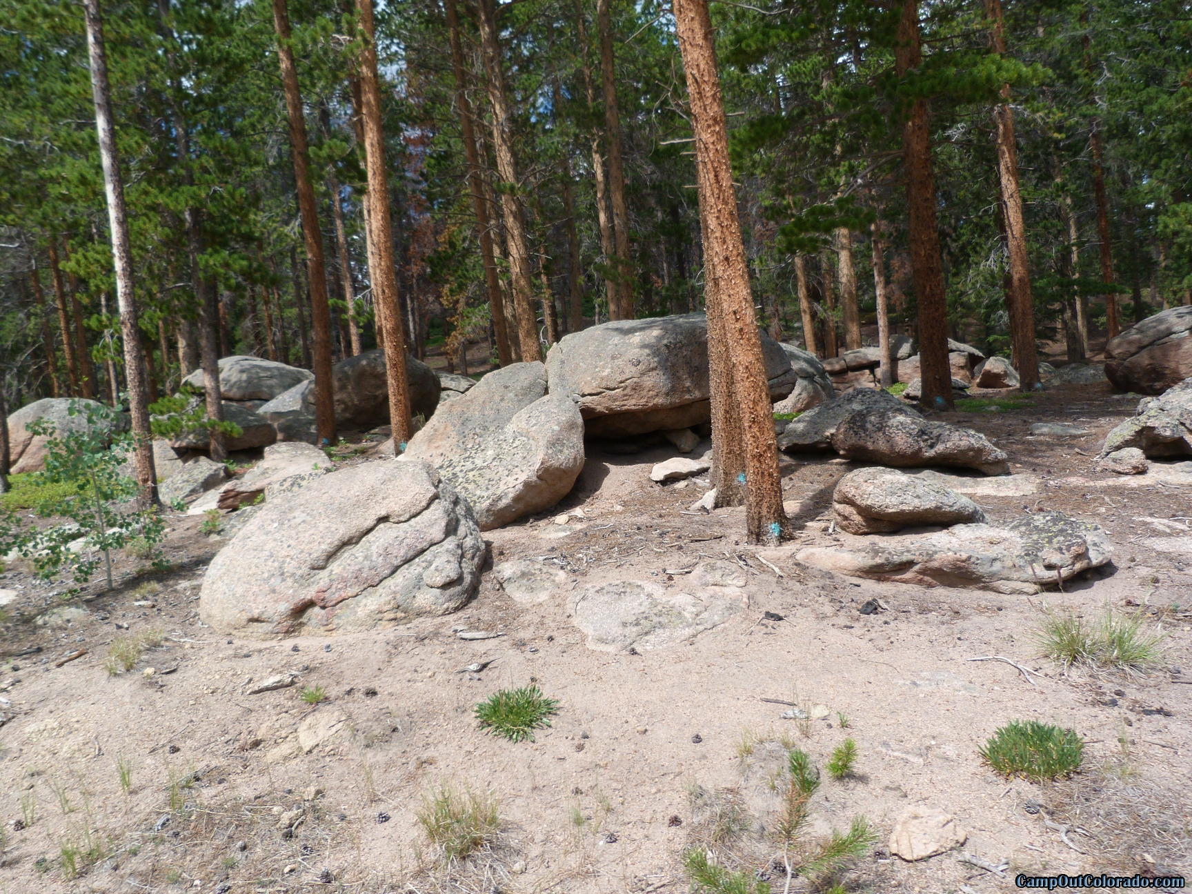 camp-out-colorado-bellaire-lake-chipmunk-home