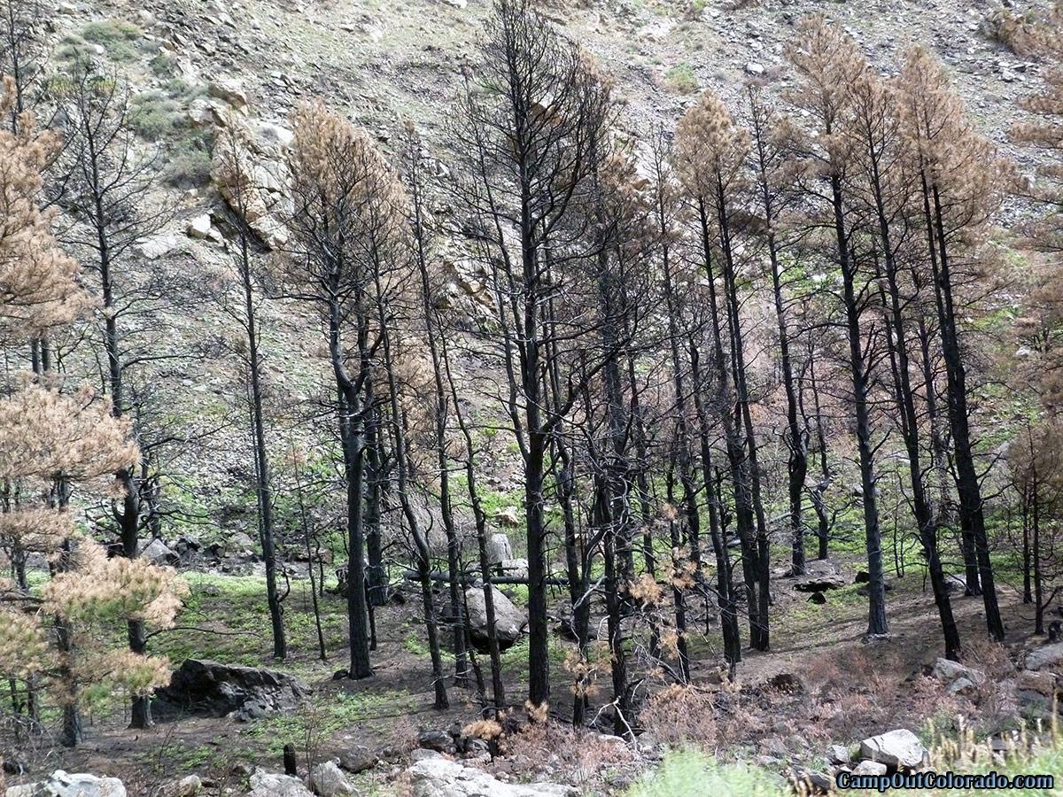 Camp Out Colorado - Colorado Wildfire Map