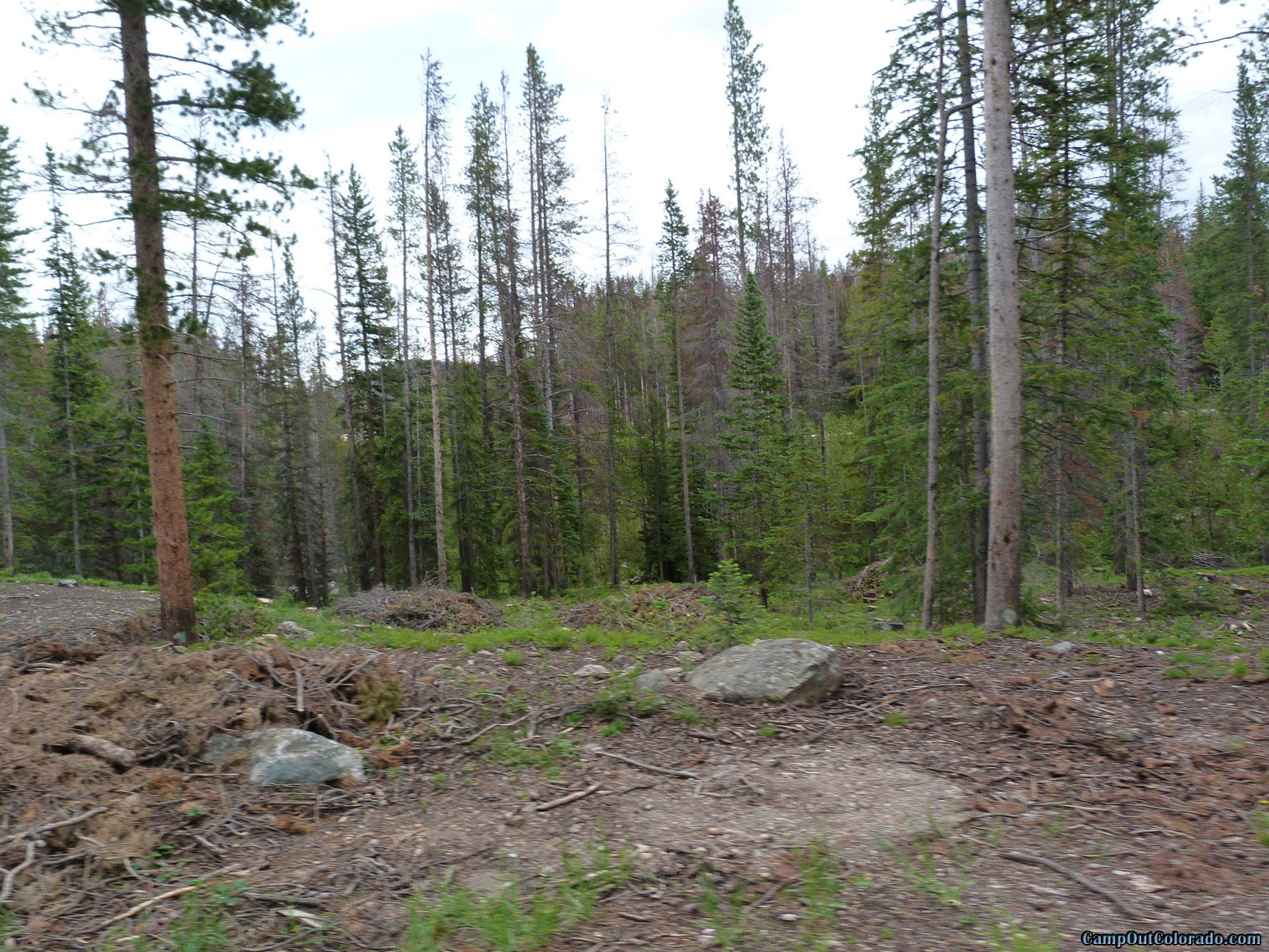 camp-out-colorado-chambers-lake-campground-thick-pines