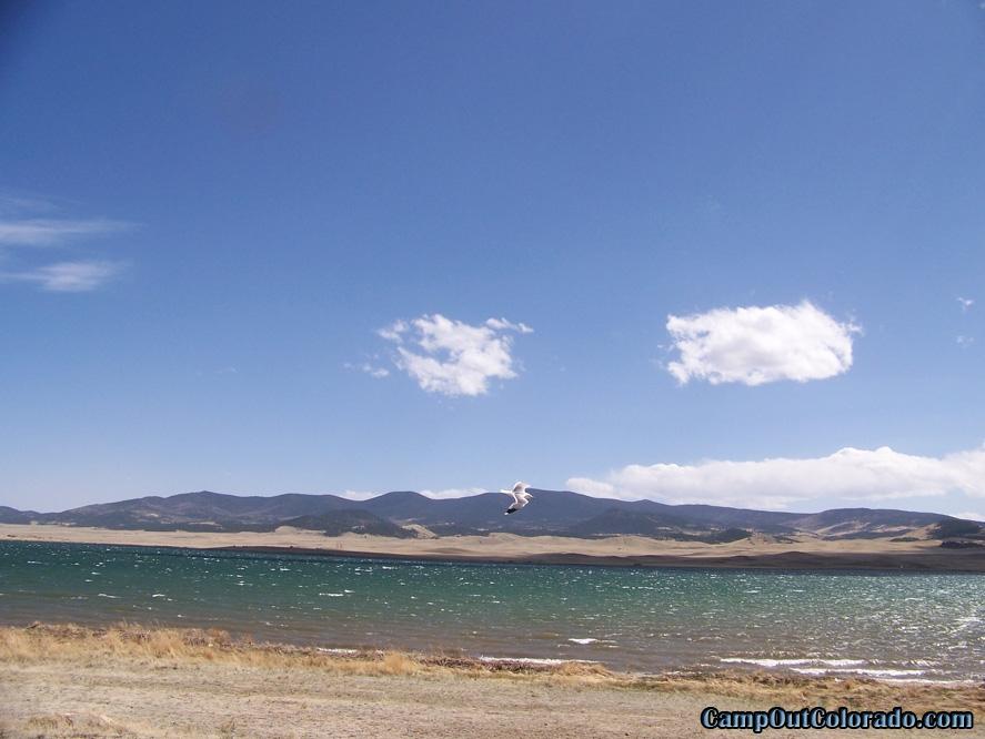 camp-out-colorado-eleven-mile-state-park-sea-gull