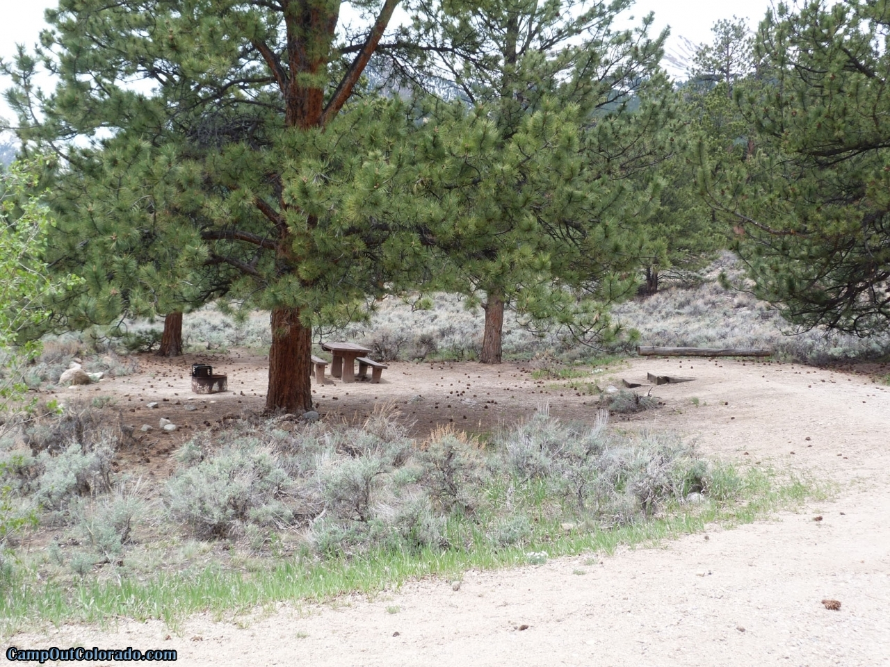 camp-out-colorado-lakeview-campground-pinecones