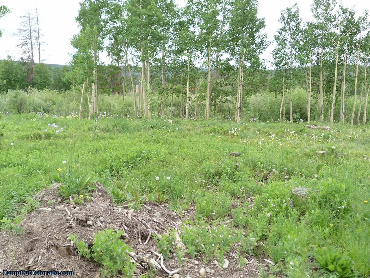 camp-out-coloradoaspen-campground-aspen-trees