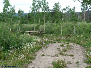 camp-out-colorado-aspen-campground-tree-cover