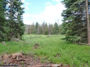 camp-out-colorado-ranger-lakes-campground-meadow.jpg