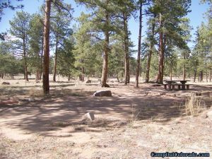 camp-out-colorado-round-mountain-campground-open-forest
