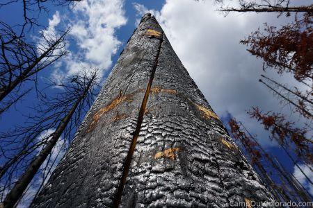 Campoutcolorado-burned-trunk
