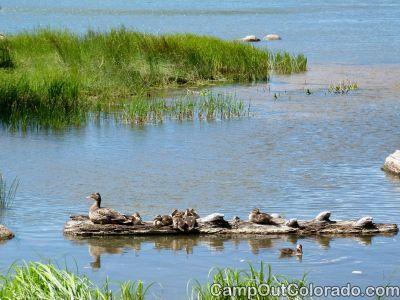 Campoutcolorado-dowdy-lake-campground-ducks