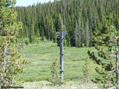 campoutcolorado-meadows-campground-rabbit-ears-bird-nest