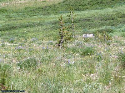 campoutcolorado-meadows-campground-rabbit-ears-meadow