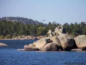 dowdy_lake_eagle