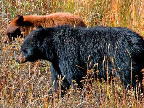 Be Bear Aware - Camping in with Bears in Colorado